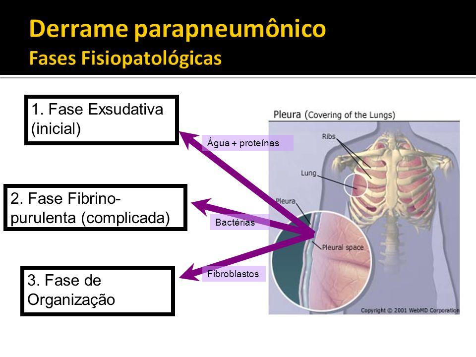 1. Fase Exsudativa (inicial) 2. Fase Fibrino- purulenta (complicada) 3. Fase de Organização Água + proteínas Bactérias Fibroblastos