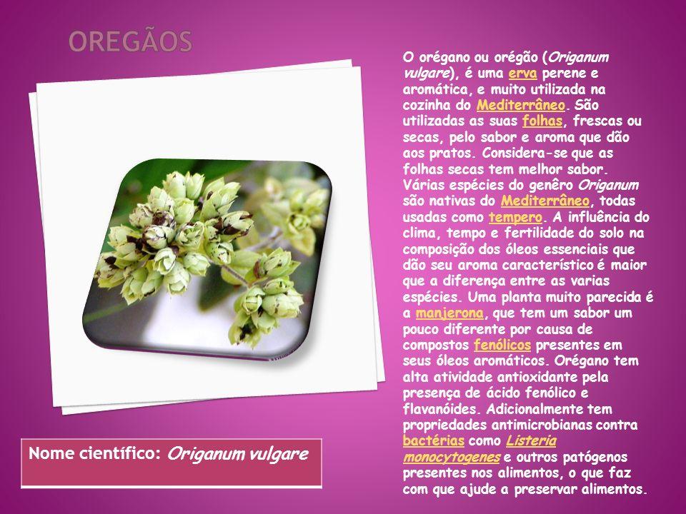 O orégano ou orégão (Origanum vulgare), é uma erva perene e aromática, e muito utilizada na cozinha do Mediterrâneo. São utilizadas as suas folhas, fr
