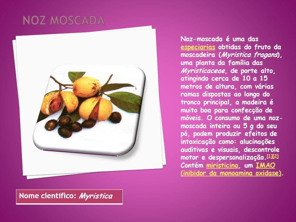 Noz-moscada é uma das especiarias obtidas do fruto da moscadeira (Myristica fragans), uma planta da família das Myristicaceae, de porte alto, atingind
