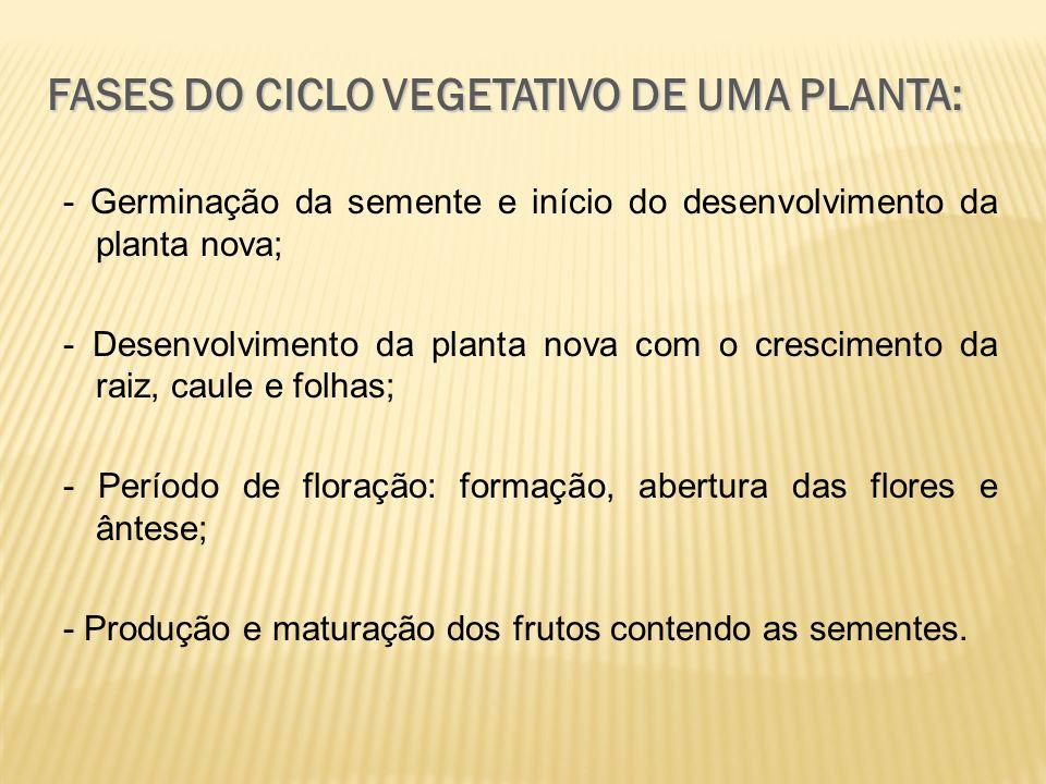 FASES DO CICLO VEGETATIVO DE UMA PLANTA: - Germinação da semente e início do desenvolvimento da planta nova; - Desenvolvimento da planta nova com o cr