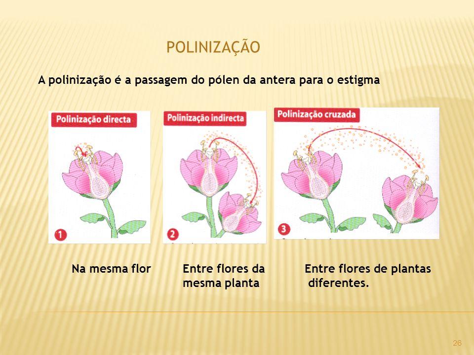 POLINIZAÇÃO A polinização é a passagem do pólen da antera para o estigma Na mesma florEntre flores da mesma planta Entre flores de plantas diferentes.