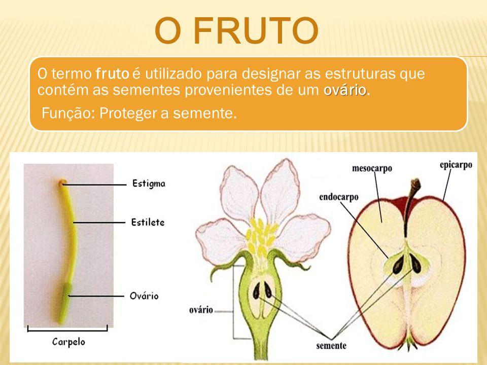 ovário O termo fruto é utilizado para designar as estruturas que contém as sementes provenientes de um ovário. Função: Proteger a semente. O FRUTO