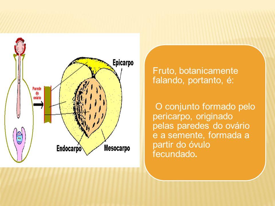 Fruto, botanicamente falando, portanto, é: O conjunto formado pelo pericarpo, originado pelas paredes do ovário e a semente, formada a partir do óvulo