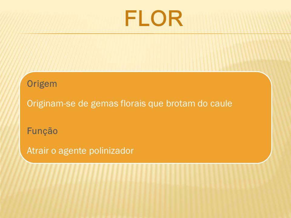 Origem Originam-se de gemas florais que brotam do caule Função Atrair o agente polinizador FLOR