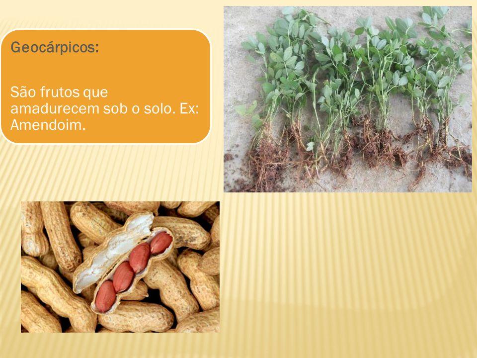 Geocárpicos: São frutos que amadurecem sob o solo. Ex: Amendoim.