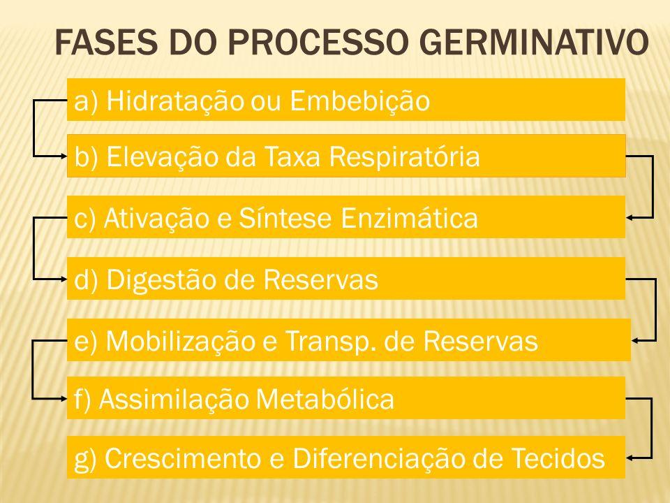 a) Hidratação ou Embebição b) Elevação da Taxa Respiratória c) Ativação e Síntese Enzimática d) Digestão de Reservas e) Mobilização e Transp. de Reser