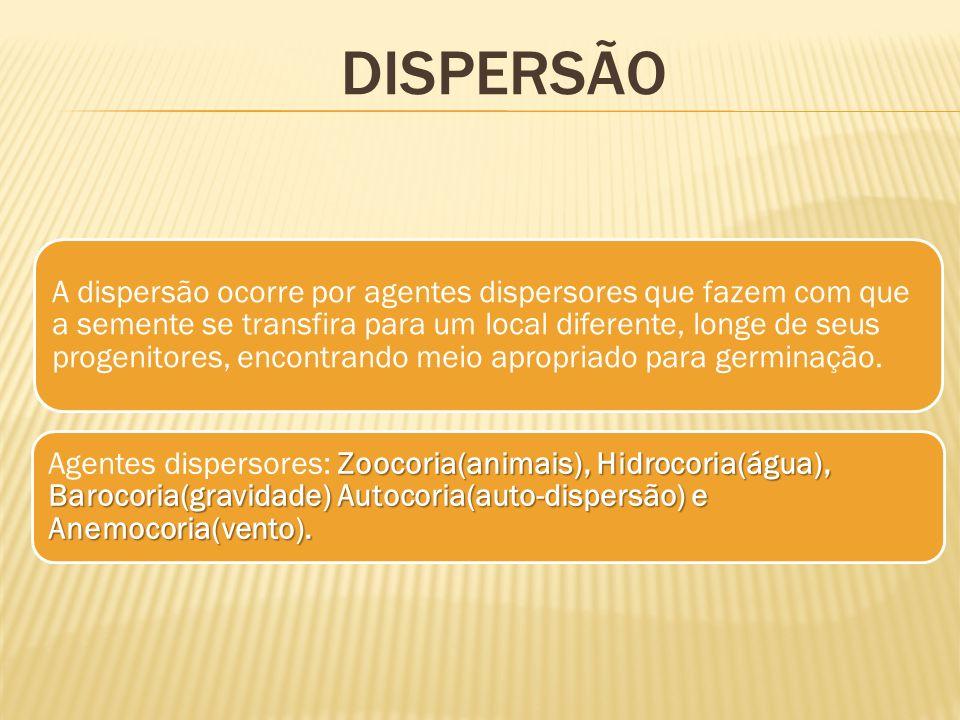 A dispersão ocorre por agentes dispersores que fazem com que a semente se transfira para um local diferente, longe de seus progenitores, encontrando m