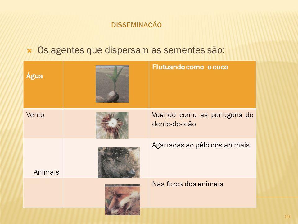 Os agentes que dispersam as sementes são: DISSEMINAÇÃO Água Flutuando como o coco VentoVoando como as penugens do dente-de-leão Animais Agarradas ao p