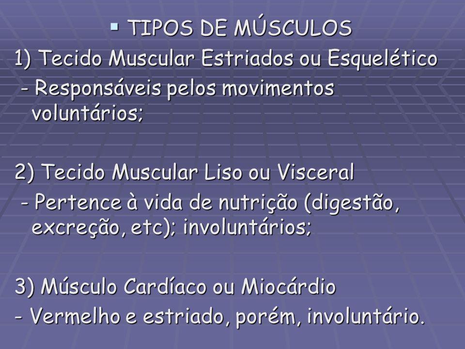TIPOS DE MÚSCULOS TIPOS DE MÚSCULOS 1) Tecido Muscular Estriados ou Esquelético - Responsáveis pelos movimentos voluntários; - Responsáveis pelos movi