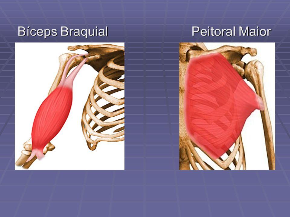 Bíceps Braquial Peitoral Maior