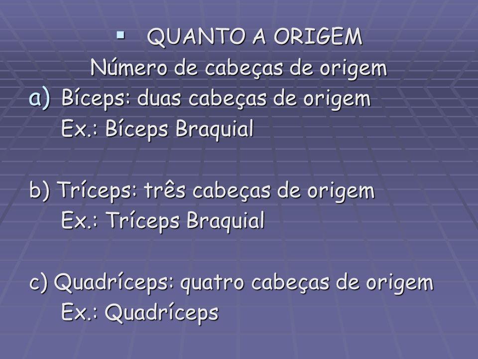 QUANTO A ORIGEM QUANTO A ORIGEM Número de cabeças de origem a) Bíceps: duas cabeças de origem Ex.: Bíceps Braquial b) Tríceps: três cabeças de origem