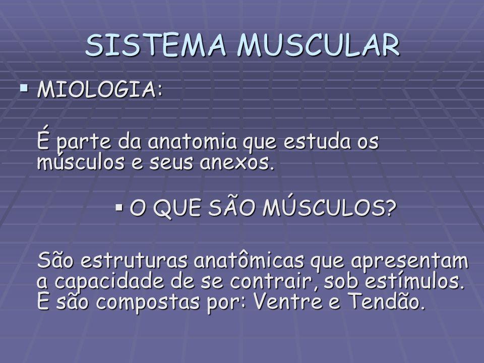 SISTEMA MUSCULAR MIOLOGIA: MIOLOGIA: É parte da anatomia que estuda os músculos e seus anexos. O QUE SÃO MÚSCULOS? O QUE SÃO MÚSCULOS? São estruturas