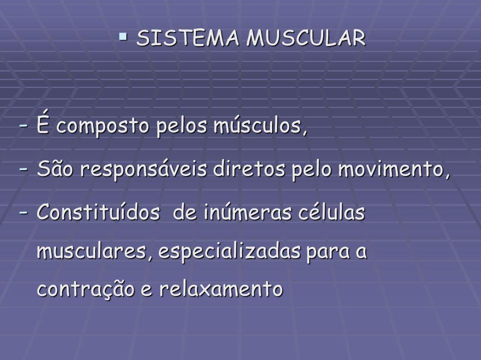 SISTEMA MUSCULAR SISTEMA MUSCULAR - É composto pelos músculos, - São responsáveis diretos pelo movimento, - Constituídos de inúmeras células musculare