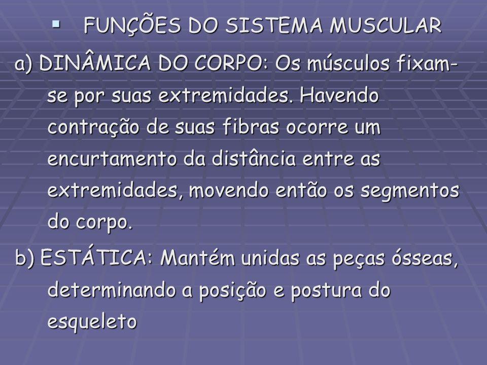 FUNÇÕES DO SISTEMA MUSCULAR FUNÇÕES DO SISTEMA MUSCULAR a) DINÂMICA DO CORPO: Os músculos fixam- se por suas extremidades. Havendo contração de suas f