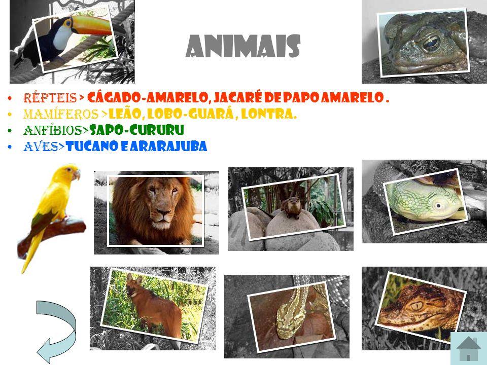 Animais Répteis > cágado-amarelo, jacaré de papo amarelo. Mamíferos > leão, lobo-guará, lontra. anfíbios> sapo-cururu Aves> tucano e ararajuba