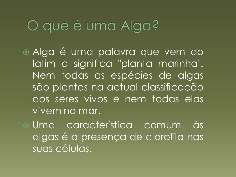 O que é uma Alga ? Reprodução das Algas Algas Comestíveis Poema das Algas Bibliografia