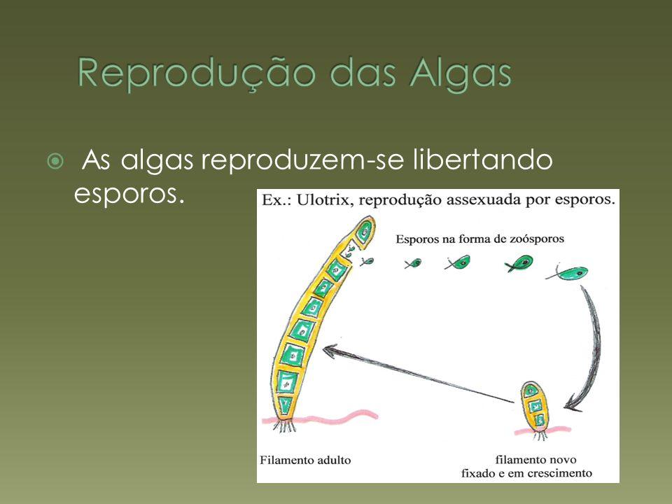As algas reproduzem-se libertando esporos.