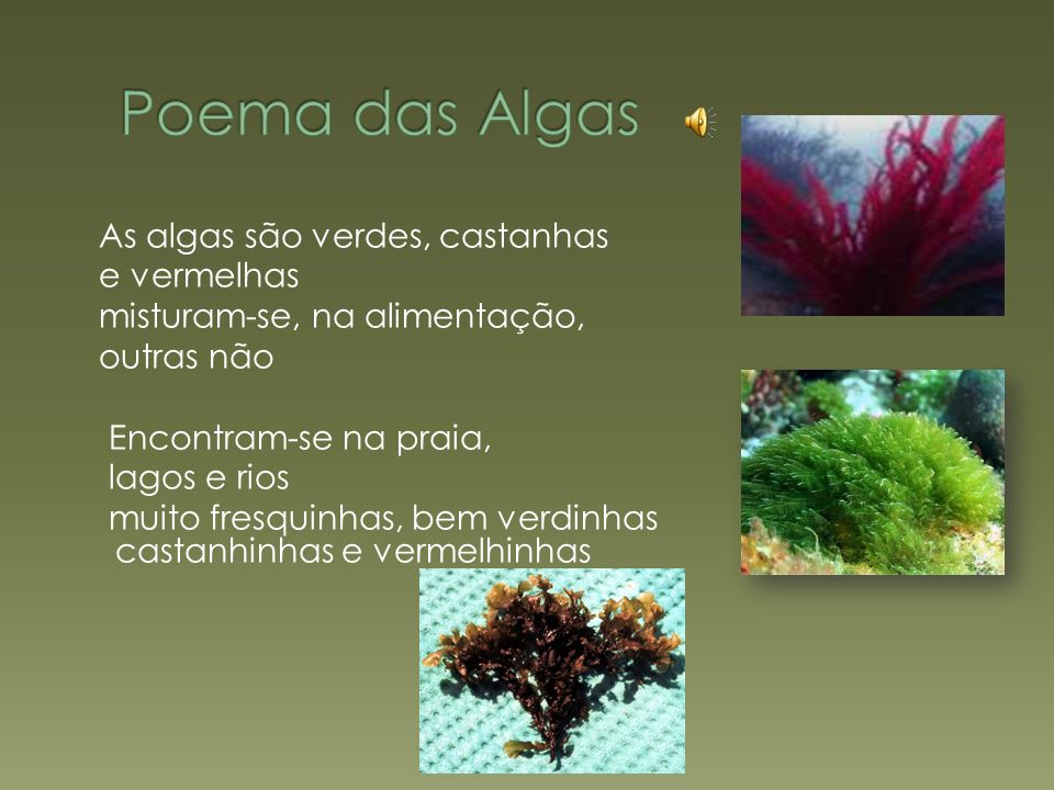 As algas são verdes, castanhas e vermelhas misturam-se, na alimentação, outras não Encontram-se na praia, lagos e rios muito fresquinhas, bem verdinhas castanhinhas e vermelhinhas