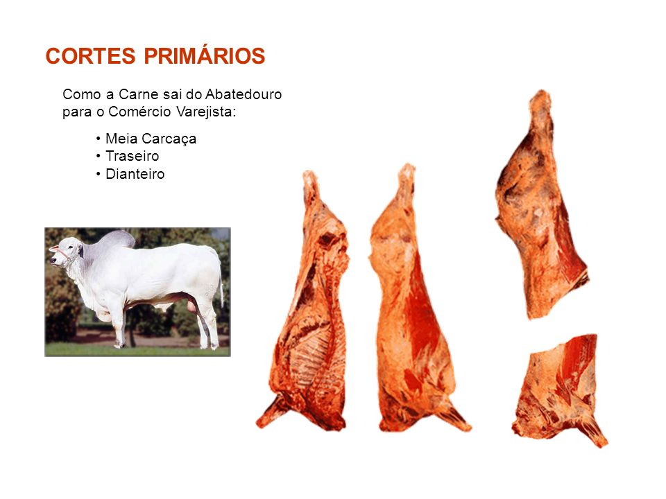CORTES PRIMÁRIOS Como a Carne sai do Abatedouro para o Comércio Varejista: Meia Carcaça Traseiro Dianteiro