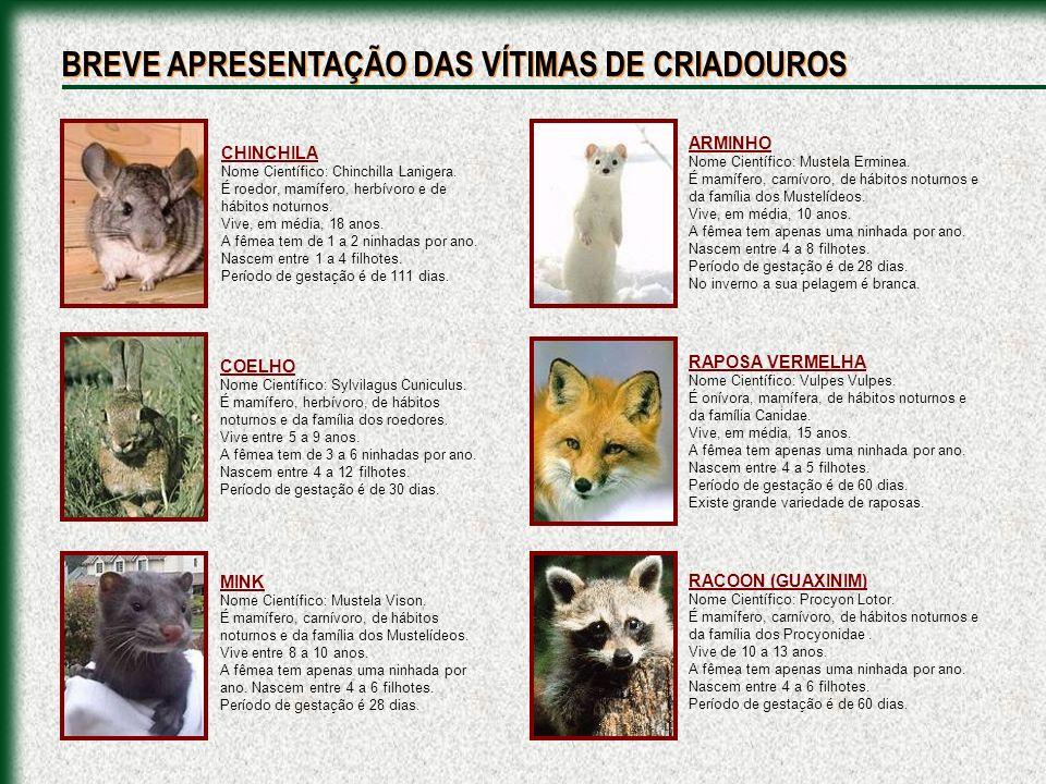 CHINCHILA Nome Científico: Chinchilla Lanigera. É roedor, mamífero, herbívoro e de hábitos noturnos. Vive, em média, 18 anos. A fêmea tem de 1 a 2 nin