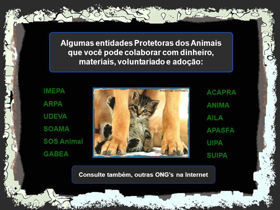 Muitos municípios resolvem o problema dos animais de rua, de forma truculenta, irracional e desumana, capturando, sacrificando e comumente, envenenand