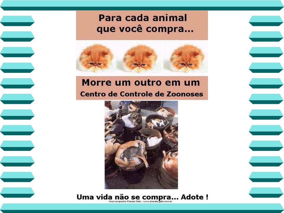 Algumas entidades Protetoras dos Animais que você pode colaborar com dinheiro, materiais, voluntariado e adoção: IMEPA ARPA UDEVA SOAMA SOS Animal GABEA ACAPRA ANIMA AILA APASFA UIPA SUIPA Consulte também, outras ONGs na Internet