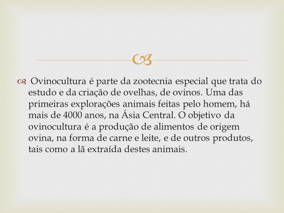 Ovinocultura é parte da zootecnia especial que trata do estudo e da criação de ovelhas, de ovinos. Uma das primeiras explorações animais feitas pelo h