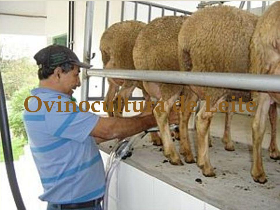 A criação de ovinos no Brasil sempre teve duas finalidades, a produção de carne e de lã.