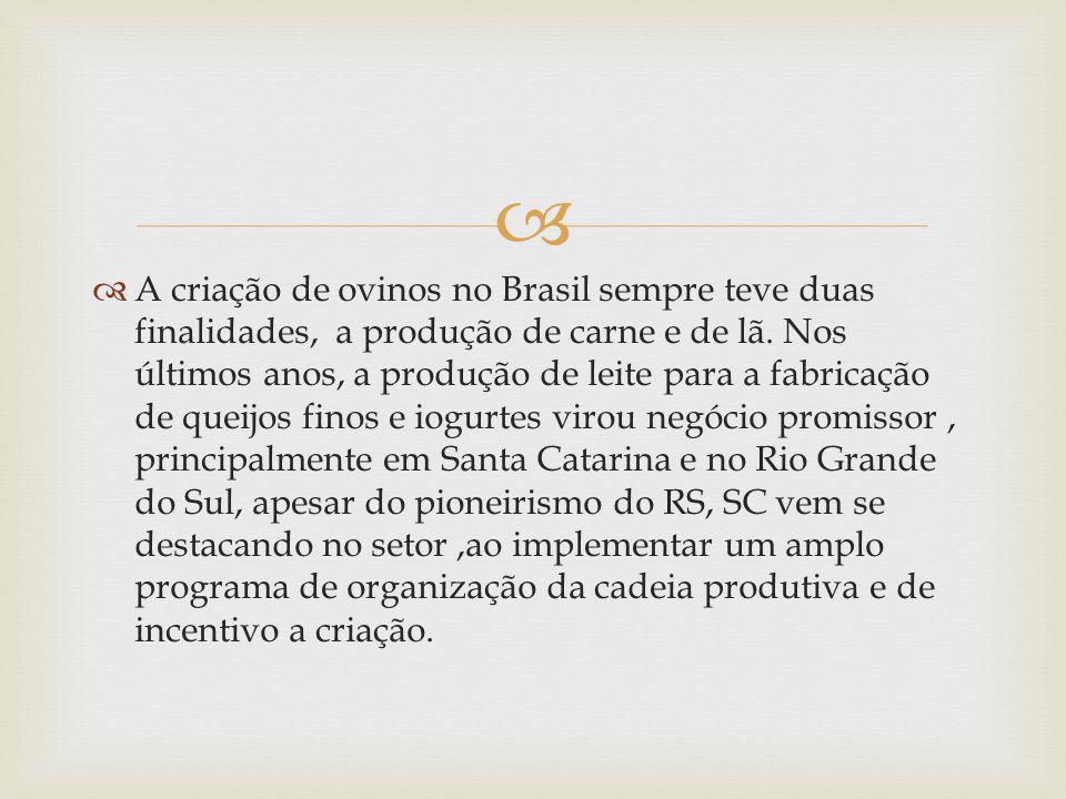 A criação de ovinos no Brasil sempre teve duas finalidades, a produção de carne e de lã. Nos últimos anos, a produção de leite para a fabricação de qu