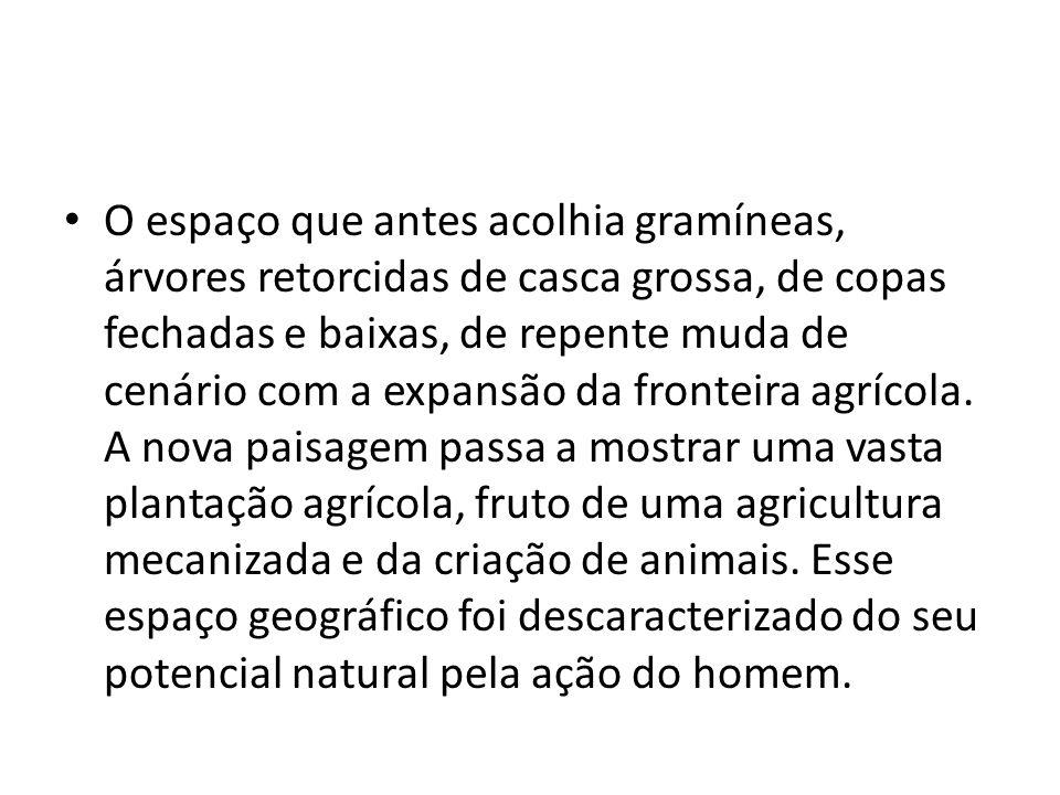 O espaço que antes acolhia gramíneas, árvores retorcidas de casca grossa, de copas fechadas e baixas, de repente muda de cenário com a expansão da fronteira agrícola.