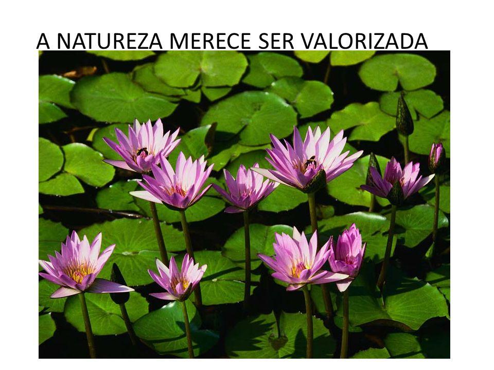 A NATUREZA MERECE SER VALORIZADA