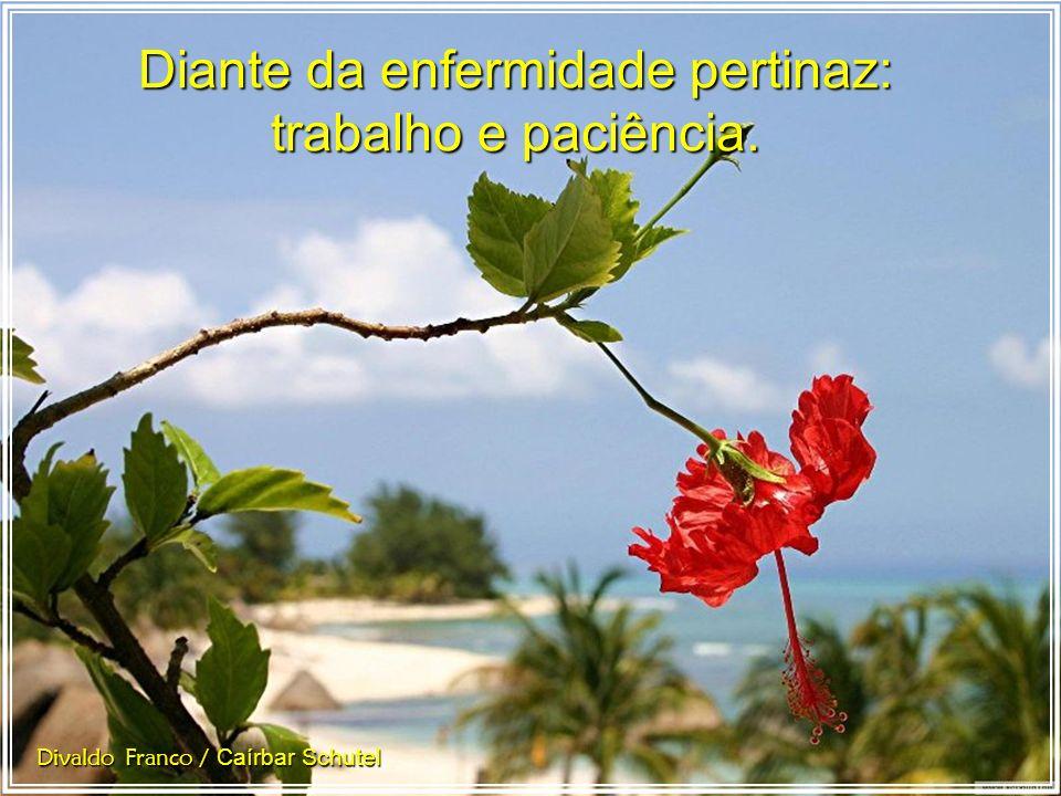 O trabalho santificando nossos atos e a paciência revelando nossos sentimentos. Divaldo Franco / Caírbar Schutel