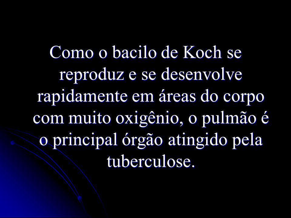 Como o bacilo de Koch se reproduz e se desenvolve rapidamente em áreas do corpo com muito oxigênio, o pulmão é o principal órgão atingido pela tubercu