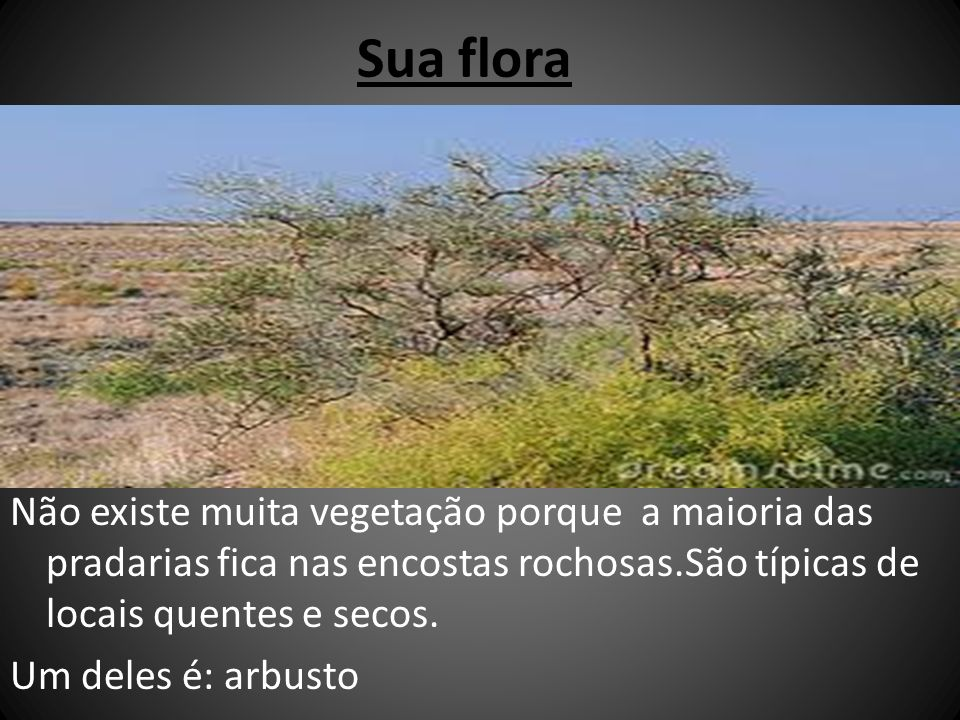 Sua flora Não existe muita vegetação porque a maioria das pradarias fica nas encostas rochosas.São típicas de locais quentes e secos. Um deles é: arbu