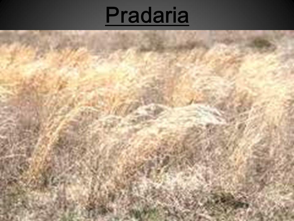 Pradaria
