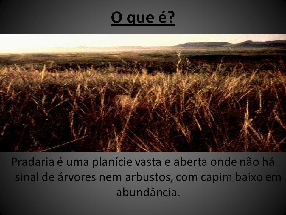 O que é? Pradaria é uma planície vasta e aberta onde não há sinal de árvores nem arbustos, com capim baixo em abundância.