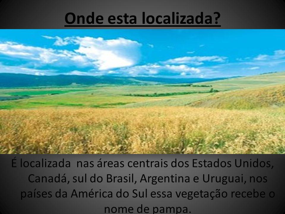 Onde esta localizada? É localizada nas áreas centrais dos Estados Unidos, Canadá, sul do Brasil, Argentina e Uruguai, nos países da América do Sul ess