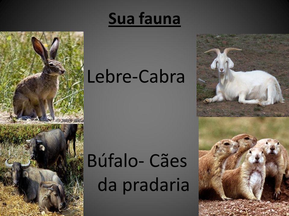 Sua fauna Lebre-Cabra Búfalo- Cães da pradaria