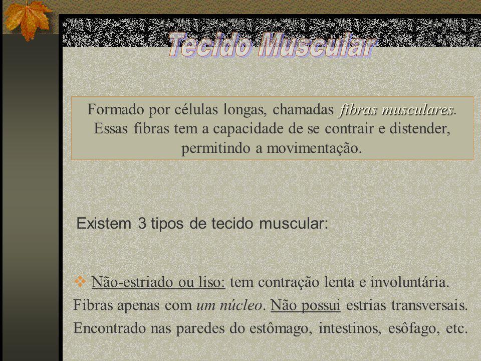 fibras musculares Formado por células longas, chamadas fibras musculares. Essas fibras tem a capacidade de se contrair e distender, permitindo a movim