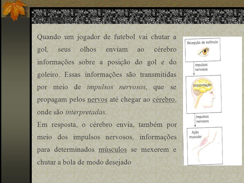 Exemplo: Quando um jogador de futebol vai chutar a gol, seus olhos enviam ao cérebro informações sobre a posição do gol e do goleiro. Essas informaçõe