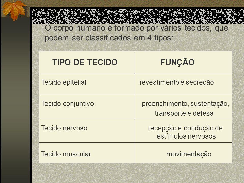 O corpo humano é formado por vários tecidos, que podem ser classificados em 4 tipos: TIPO DE TECIDO FUNÇÃO Tecido epitelial revestimento e secreção Te
