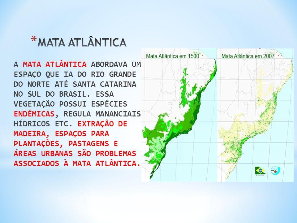 A MATA ATLÂNTICA ABORDAVA UM ESPAÇO QUE IA DO RIO GRANDE DO NORTE ATÉ SANTA CATARINA NO SUL DO BRASIL. ESSA VEGETAÇÃO POSSUI ESPÉCIES ENDÉMICAS, REGUL