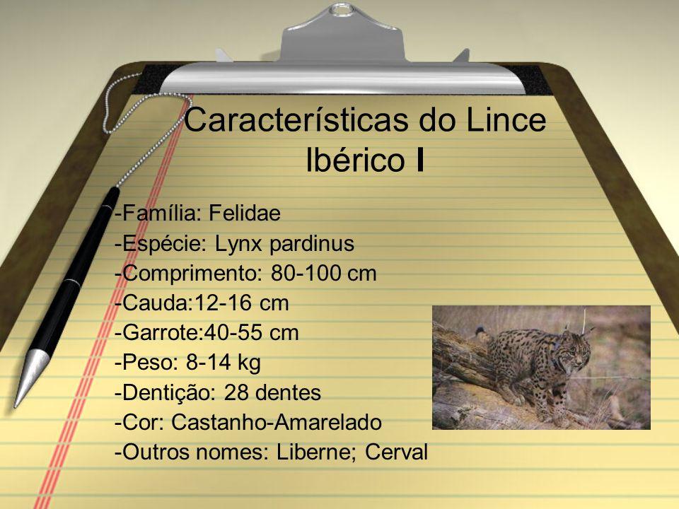 Características do Lince Ibérico I -Família: Felidae -Espécie: Lynx pardinus -Comprimento: 80-100 cm -Cauda:12-16 cm -Garrote:40-55 cm -Peso: 8-14 kg -Dentição: 28 dentes -Cor: Castanho-Amarelado -Outros nomes: Liberne; Cerval