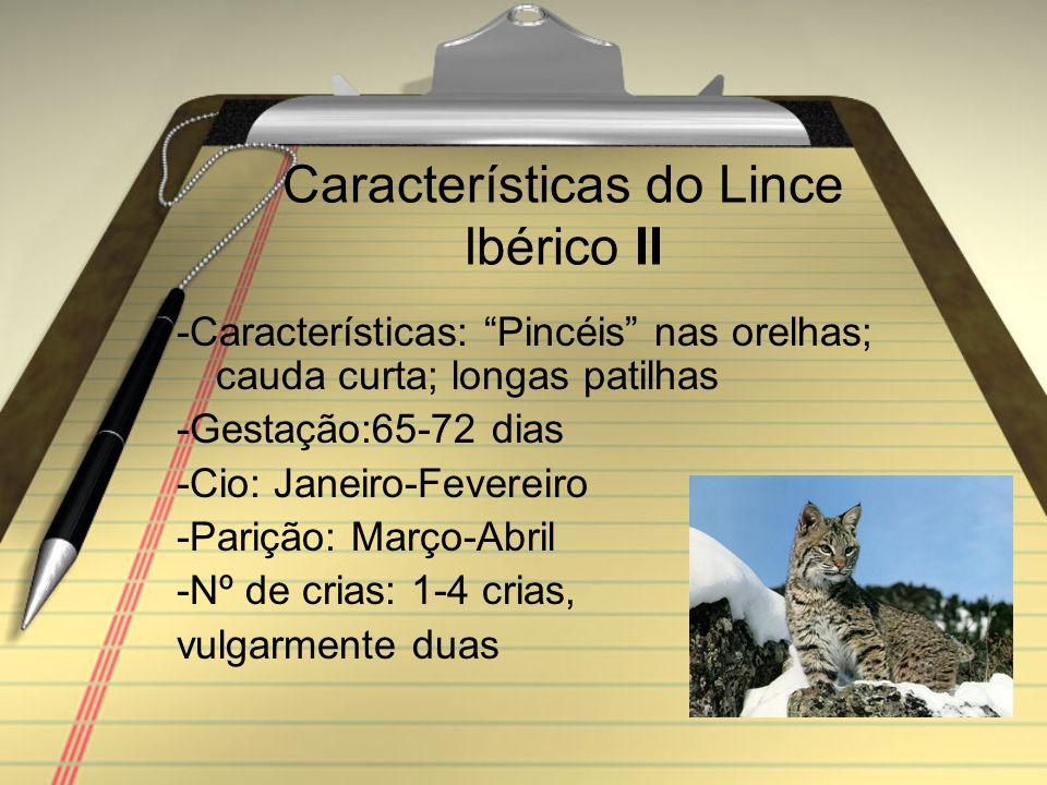 Características do Lince Ibérico II -Características: Pincéis nas orelhas; cauda curta; longas patilhas -Gestação:65-72 dias -Cio: Janeiro-Fevereiro -Parição: Março-Abril -Nº de crias: 1-4 crias, vulgarmente duas