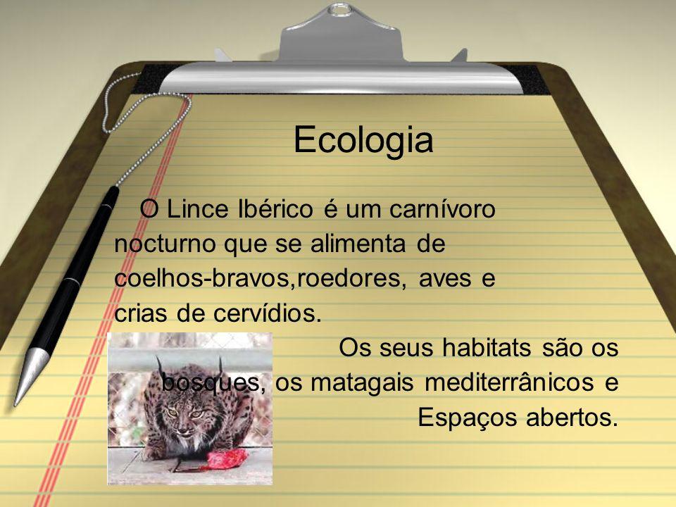 Ecologia O Lince Ibérico é um carnívoro nocturno que se alimenta de coelhos-bravos,roedores, aves e crias de cervídios.