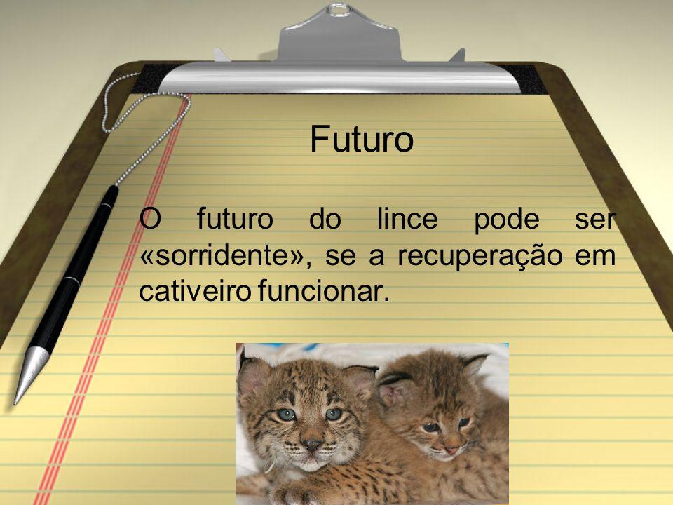 Futuro O futuro do lince pode ser «sorridente», se a recuperação em cativeiro funcionar.