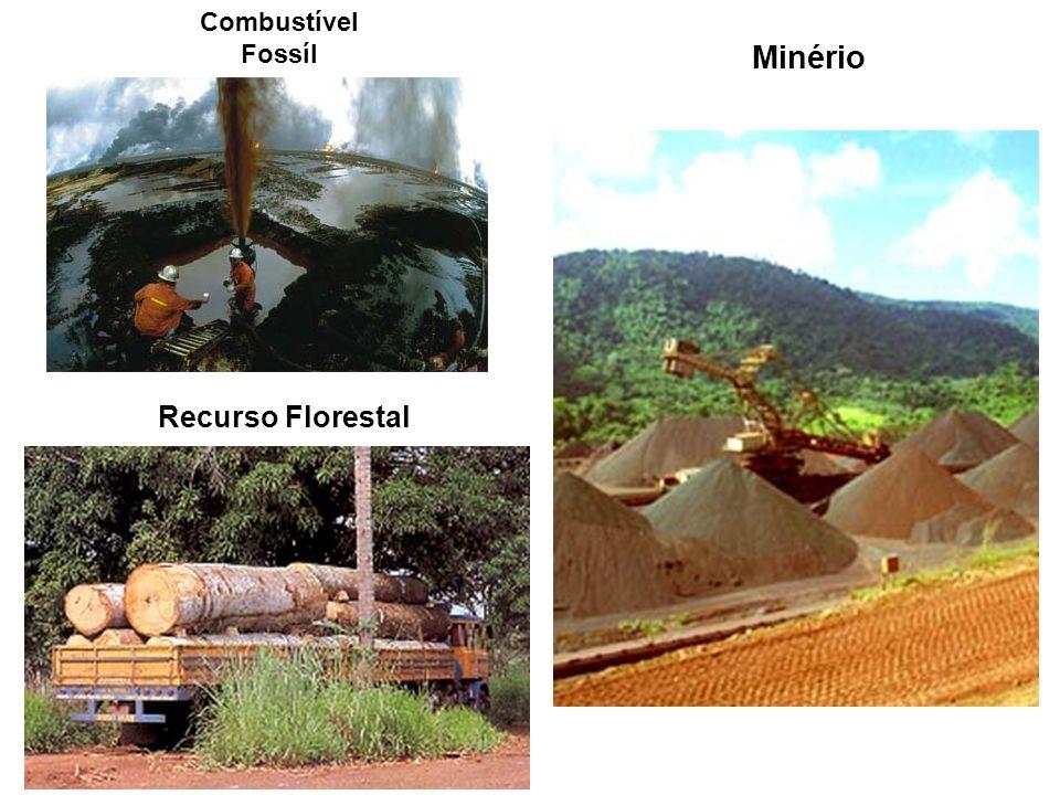 Recurso Florestal Minério Combustível Fossíl