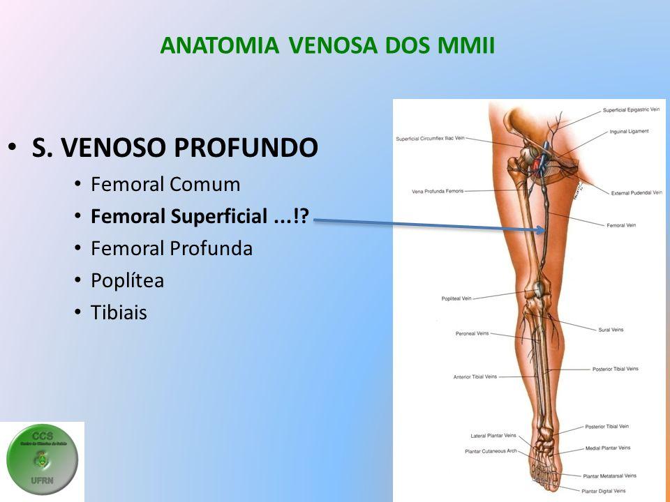 ANATOMIA VENOSA DOS MMII S.