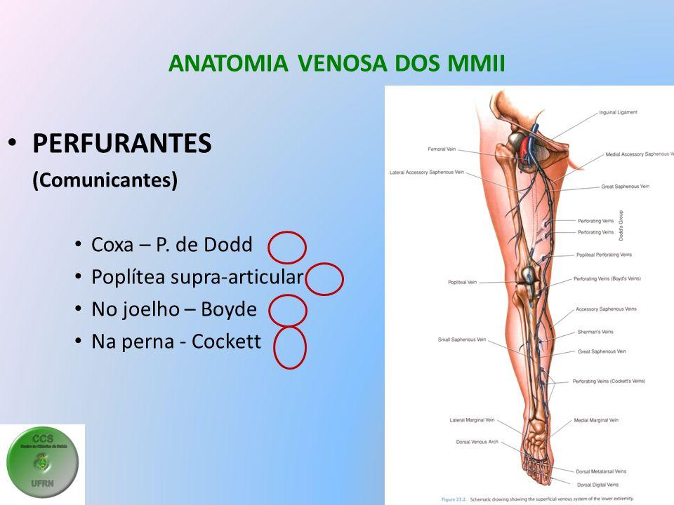 ANATOMIA VENOSA DOS MMII PERFURANTES (Comunicantes) Coxa – P.