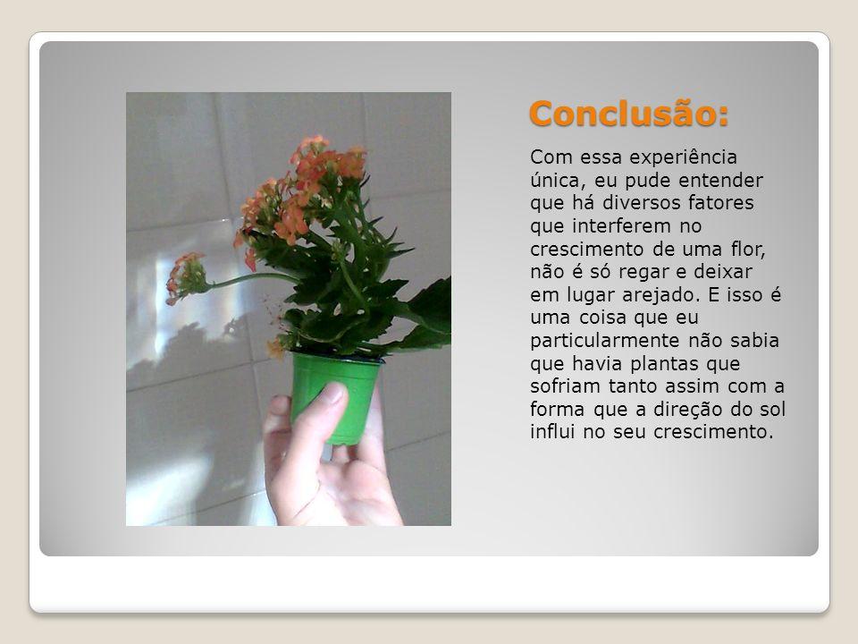 Conclusão: Com essa experiência única, eu pude entender que há diversos fatores que interferem no crescimento de uma flor, não é só regar e deixar em